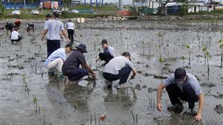 Chinese navy vessel crew members plant mangroves in Fiji