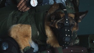 Brave military dog completes first parachuting task
